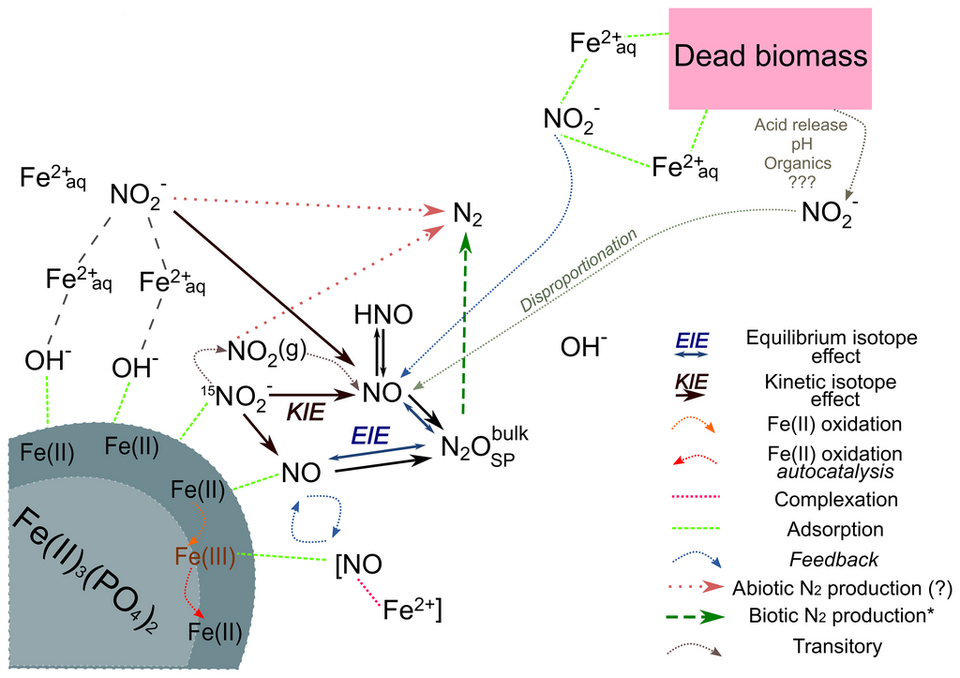 Conceptual figure depicting the proposed reaction mechanisms and isotopic feedbacks between the different N species during chemodenitrification induced by the presence of a mineral surface or  biomass.